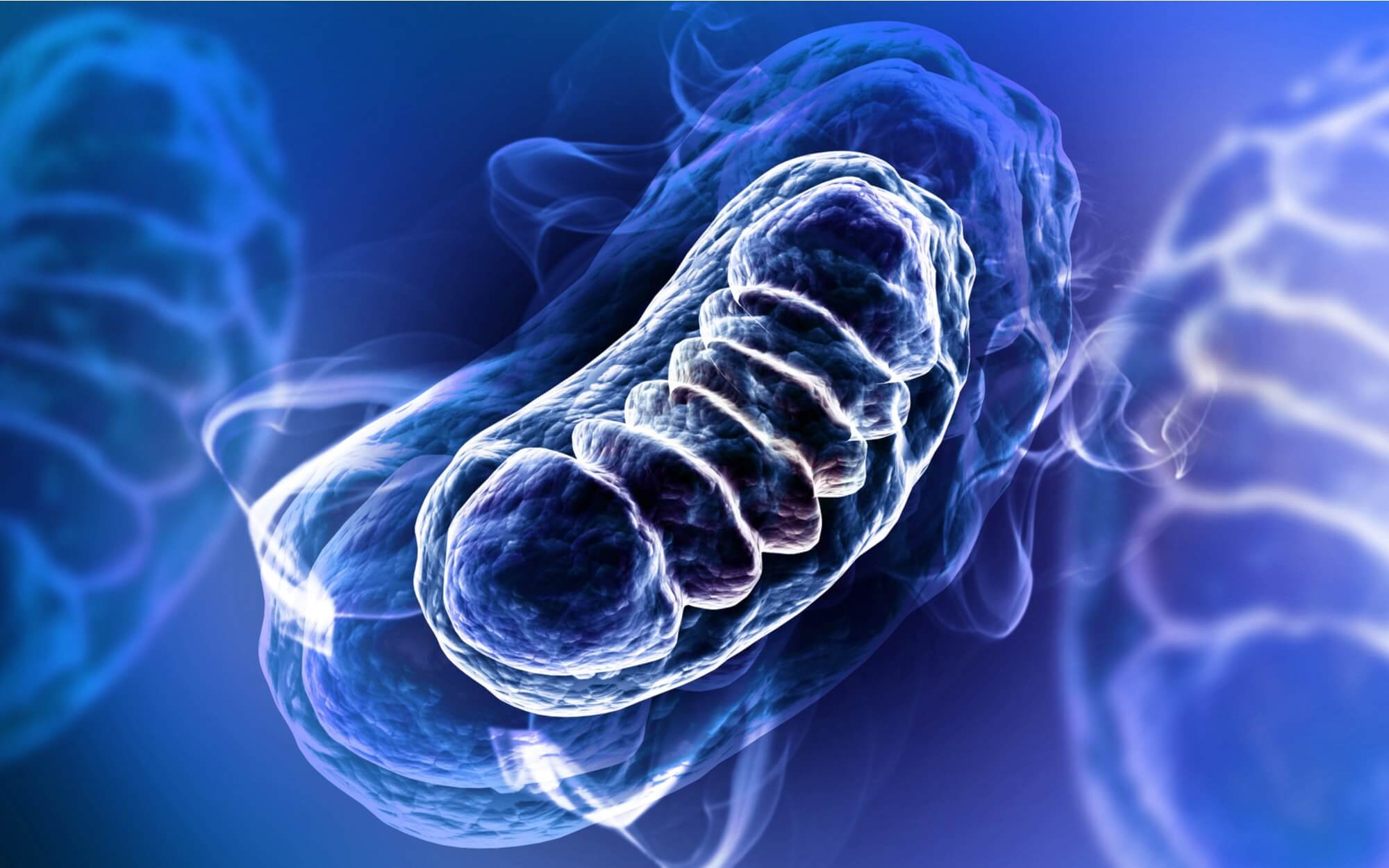 What is the Role of Mitochondria in Aging?