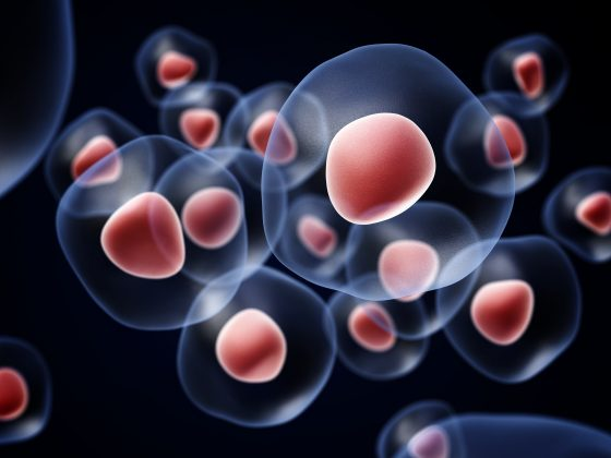 aging and stem cells